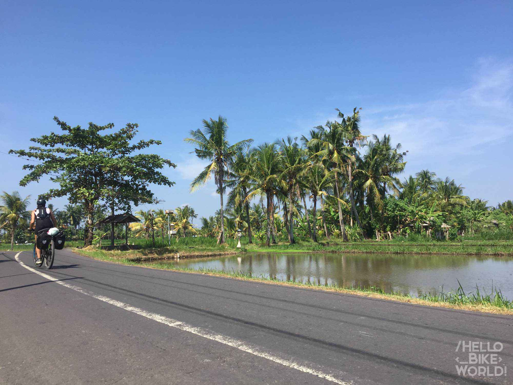 In the Northeast Denpasar, Nature found